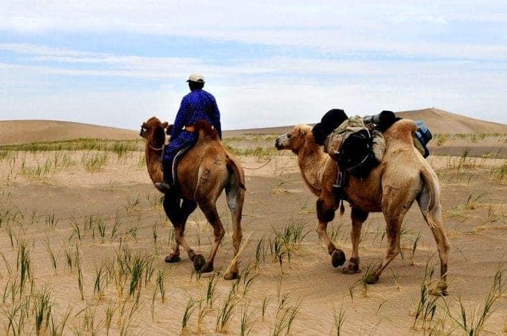 Zwiedzając region Bajanchongor koniecznie wybierz się na wycieczkę wielbłądami po pustyni Gobi fot. pixabay