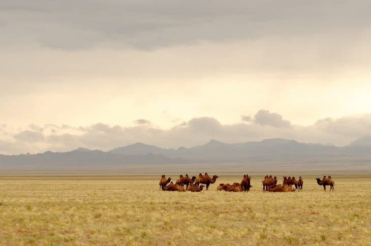 Ajmak gobijsko-ałtajski – tam gdzie góry spotykają pustynię