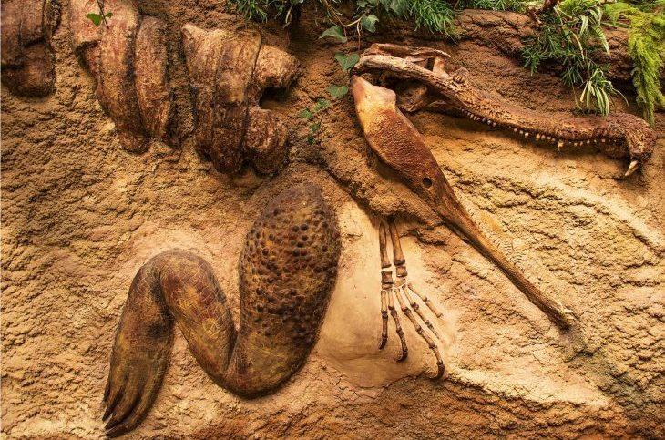 Ajmak wschodniogobijski – czyli gdzie mieszkają dinozaury